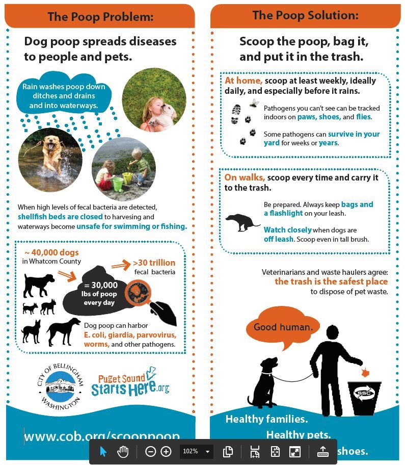 Dog Waste Infographic