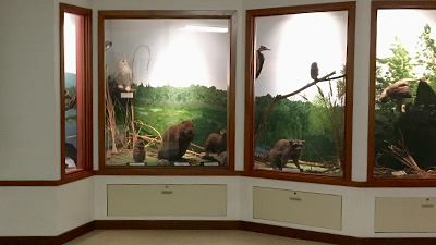 Tennant Lake Interpretive Center Interior Wildlife Display