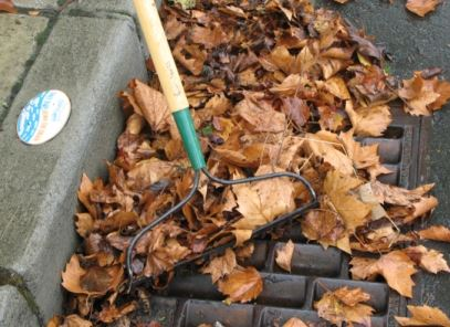 Photo of Storm Drain Leaves