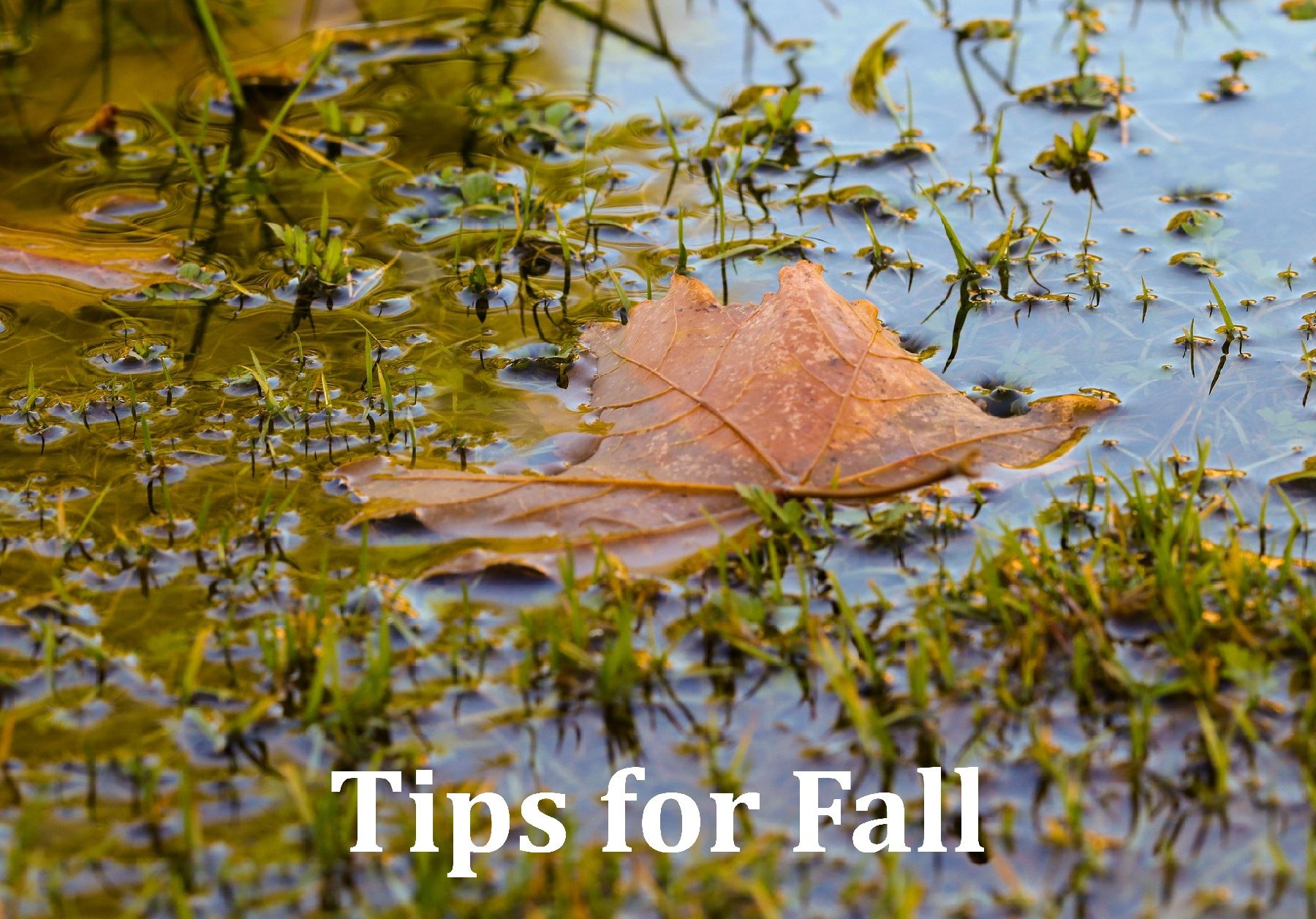 Click to open Fall Tips